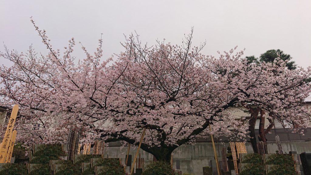 東京都中野区さる寺