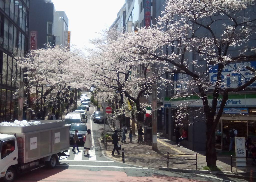 渋谷桜まつり.jpg